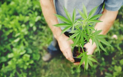 The medicinal cannabinoids you haven't heard of: What are CBC, CBN, CBN, THCV?