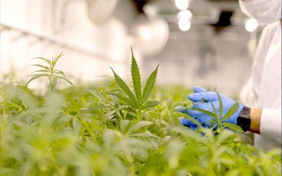On the Pharm: Ora Pharm secures Medicinal Cannabis License