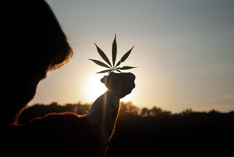 Is Medicinal Cannabis Good For the Planet?